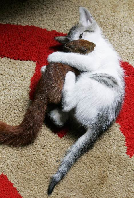 cat and squirrel hugging
