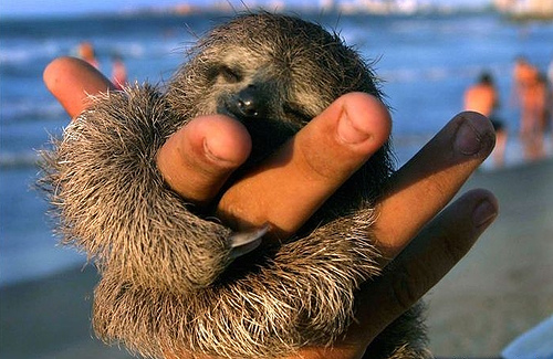 happy sloth at the beach