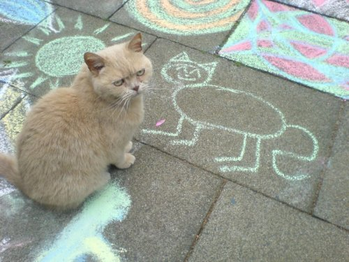 kitten sidewalk chalk drawing