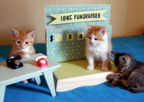 fundraising cats