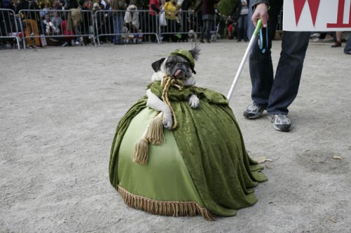 gone with the wind pug dog costume