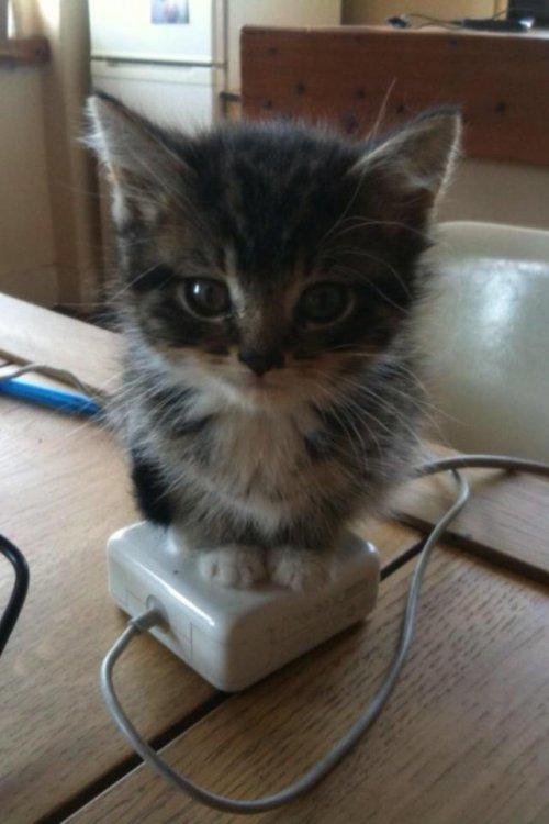 kitten on laptop transformer