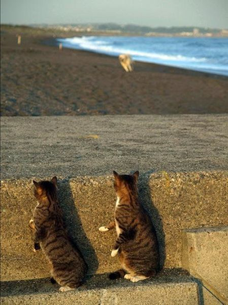 cats hiding from dog