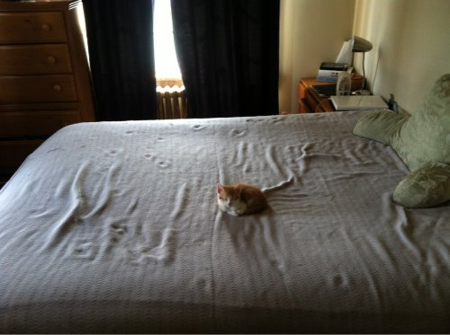 cat in middle of bed
