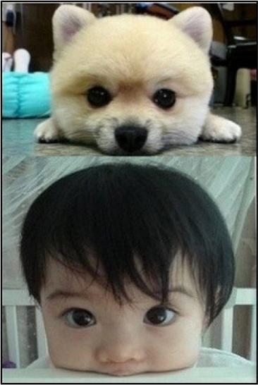 baby and pomeranian