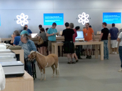 tiny horse in apple store