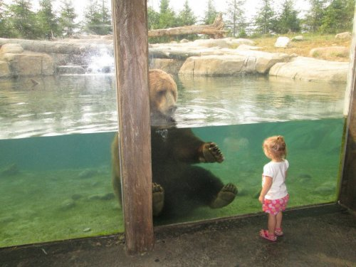 girl looking at bear in zoo