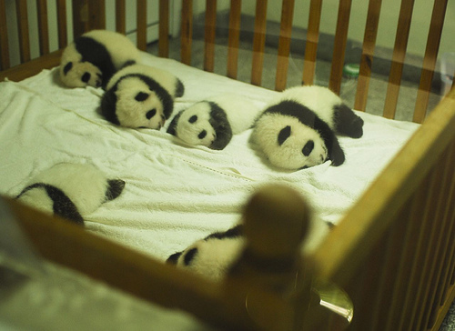 baby pandas sleeping in crib
