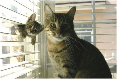 cat and kitten posing