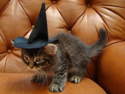 kitten in witch halloween costume