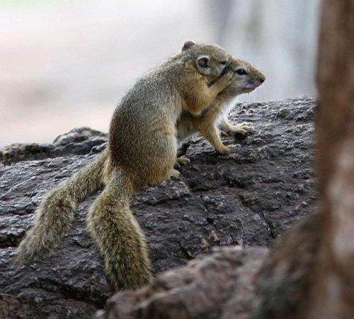 squirrels sharing a secret