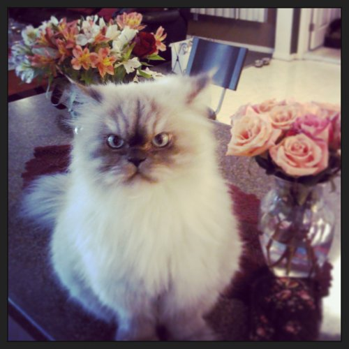 grumpy cat with flowers