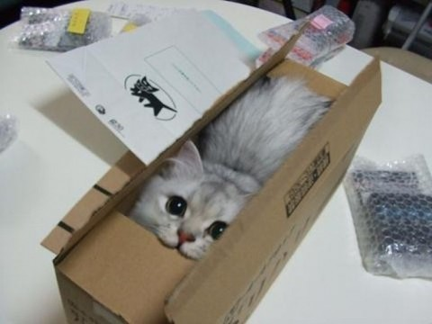 cute kitten in a box