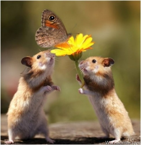hamsters catching a butterfly