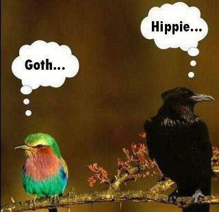 goth hippie birds