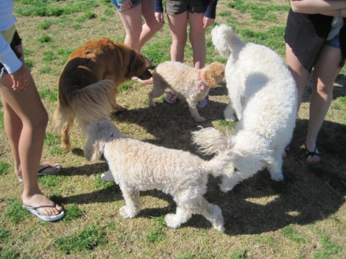 dogs sniffing butts