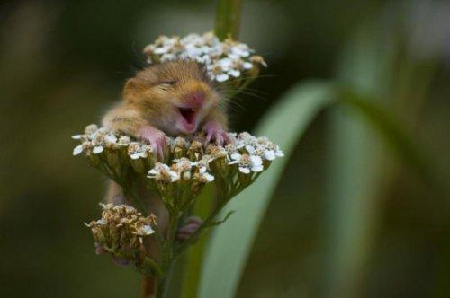 hamster in flower