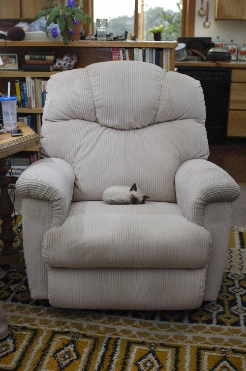 kitten on a big armchair