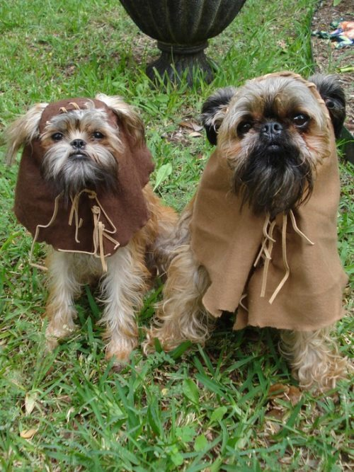 ewoks that look like dogs