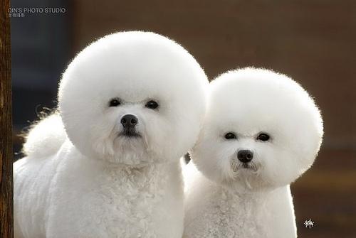 bob ross dogs