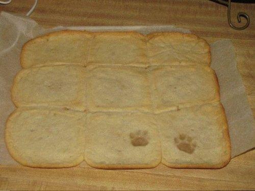cat prints in cookie dough